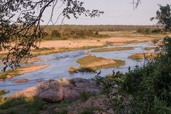 Crocodile river in South Africa Stock Photos