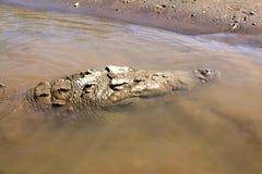 Crocodile river tour on the Tarcoles River Stock Images