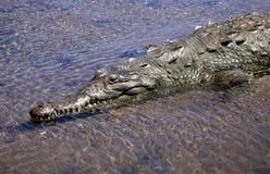 Crocodile river tour on the Tarcoles River Stock Image