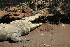 Crocodile river tour on the Tarcoles River Stock Photo