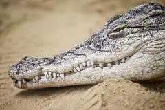 Crocodile's muzzle Stock Photo