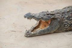 Crocodile Safari Park Tunisia Royalty Free Stock Image