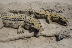Crocodile sand in Andalusia Royalty Free Stock Images