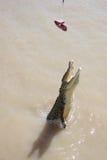 crocodile sauvage Image libre de droits