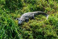 Crocodile sauvage dans Chitwan-Nationalpark photo libre de droits