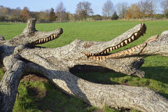 Crocodile sculpture Stock Photos