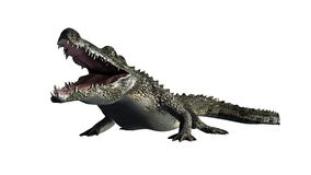 Crocodile - separated on white background Stock Images