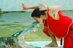 Crocodile show Royalty Free Stock Image