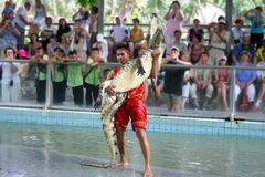 Crocodile Show Stock Images