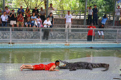 Crocodile show. PATTAYA, THAILAND - MAY 7: Show of crocodiles performer and the crocodile during a show in a zoo on May 7, 2009 in Pattaya, Thailand. Each year Royalty Free Stock Photos