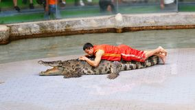 Crocodile show. Animal trainer and crocodiles in the arena. Thailand. Asia stock footage