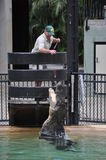 Crocodile Show in Australia Zoo stock photography