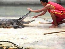Crocodile show at crocodile farm Stock Photography