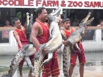 Crocodile show at crocodile farm Stock Photos