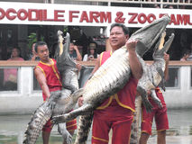 Crocodile show at crocodile farm Stock Images