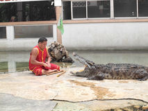 Crocodile show at crocodile farm Stock Photos