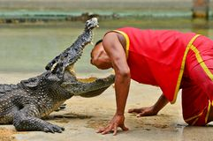 Crocodile show Royalty Free Stock Images
