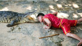 The crocodile show at Samut Prakan Crocodile Farm Stock Image