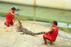 Crocodile show Stock Image