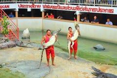 Crocodile show Stock Photography