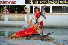Crocodile show at Samutprakarn Crocodile Farm and Zoo. Man performed crocodile show by laying on the crocodile while his friend hold another one Stock Images