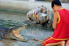 Crocodile Show at Samutprakarn Crocodile Farm and Zoo, Thailand. Man paid respect to the crocodile before starting the show Royalty Free Stock Photography