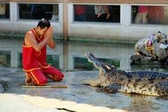 Crocodile Show at Samutprakarn Crocodile Farm and Zoo, Thailand. Man paid respect to the crocodile before starting the show Royalty Free Stock Photos