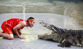 Crocodile show in Thailand stock images