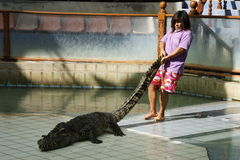 Crocodile show in Thailand Royalty Free Stock Photo
