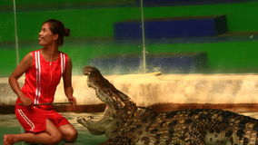 Crocodile show in thailand stock video