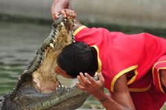 Crocodile show in thailand. The keeper of a zoo has put a head in a mouth of the crocodile at Samutprakan Crocodile Farm and Zoo royalty free stock images
