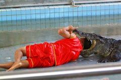 Crocodile show in Thailand Stock Image