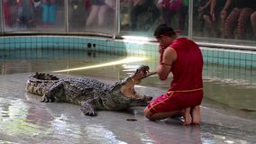 Crocodile show. THAILAND, PATTAYA, APRIL 1, 2014: People at extreme crocodile show in Pattaya, Thailand stock video footage