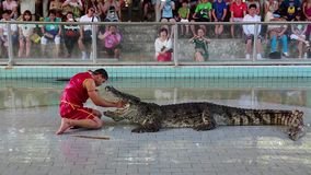 Crocodile show. THAILAND, PATTAYA, APRIL 1, 2014: People at extreme crocodile show in Pattaya, Thailand stock footage