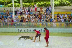 Crocodile show in Thailand Stock Photography