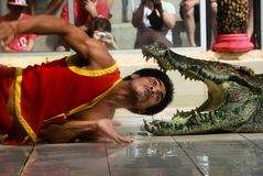 Crocodile Show. You can see in Crocodile Farm or Zoo in Thailand it is exiting and interesting Royalty Free Stock Image