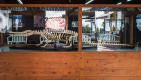 Crocodile skeleton in Oniyama Jigoku or Monster mountain hell Royalty Free Stock Photography