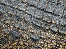 Free Crocodile Skin Royalty Free Stock Photography - 14484497