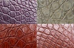 Free Crocodile Skin Stock Photos - 17885463