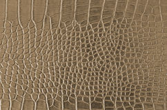Crocodile Skin Royalty Free Stock Image