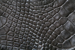 Crocodile skin Stock Image