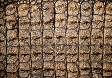 Crocodile skin Stock Images