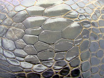 Crocodile skin - background Stock Image