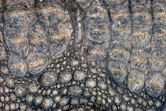 Crocodile skin background Stock Photography