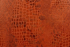 Crocodile Skin Background with Pattern Texture  Stock Photo