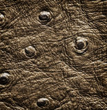 Crocodile skin close up texture Royalty Free Stock Image
