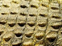 Crocodile Skin Stock Photos