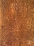 Crocodile skin leather texture Royalty Free Stock Images