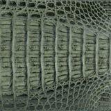 Crocodile skin leather texture. Texture of crocodile skin background macro close-up stock image