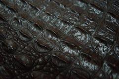 Crocodile skin macro shooting Royalty Free Stock Image